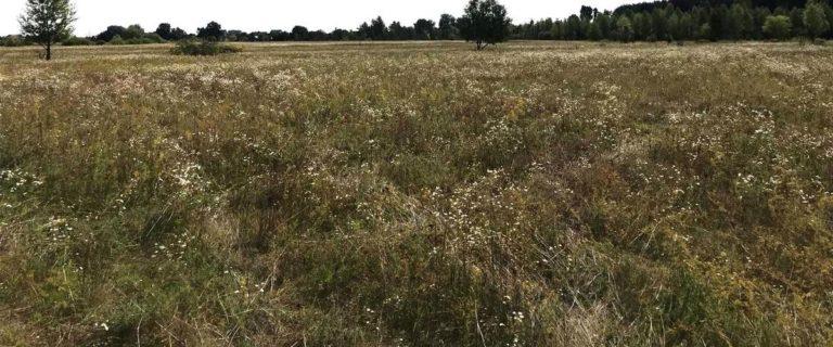 Продается 2 Га земли в окружении леса у Десны. БЕЗ КОМИССИИ