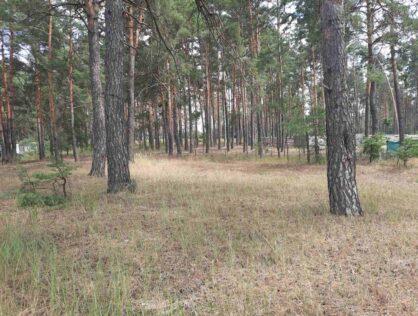 Продаж земельної ділянки Нижча Дубечня 20сот